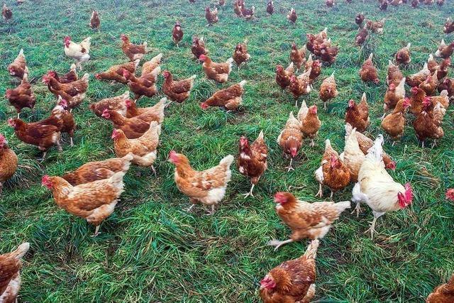 Ein mobiler Hühnerstall für 1600 Tiere soll beim Markhof entstehen