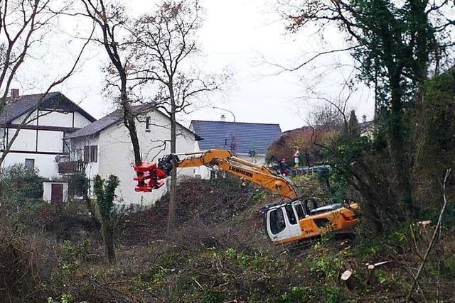 Nach radikalem Abholzen: Doch kein Bauen in den