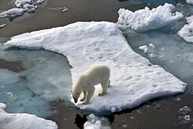 Gefährliche Gäste am Nordpolarmeer
