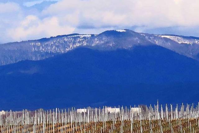 Opfinger Rebfelder im Schatten des verschneiten Kandels