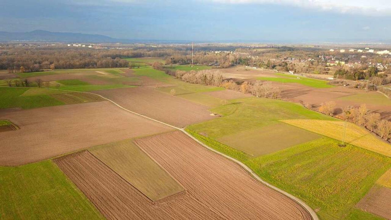Blick über das Dietenbachgebiet nach Westen.  | Foto: Michael Saurer