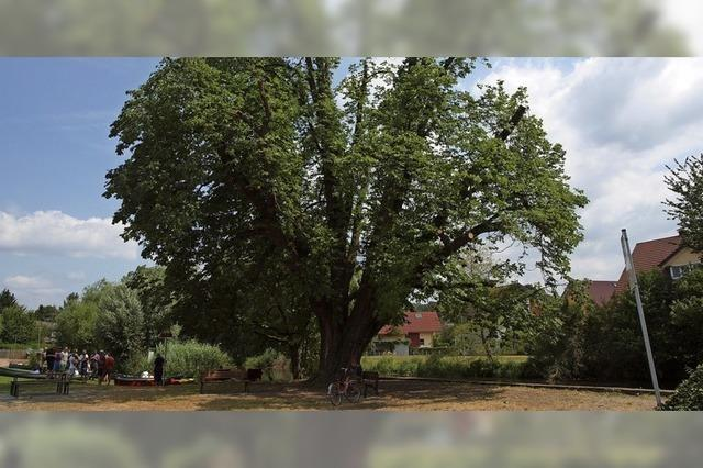 Baum im