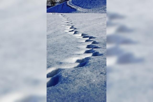 Wie steht's um die Winterwanderwege in Breitnau?