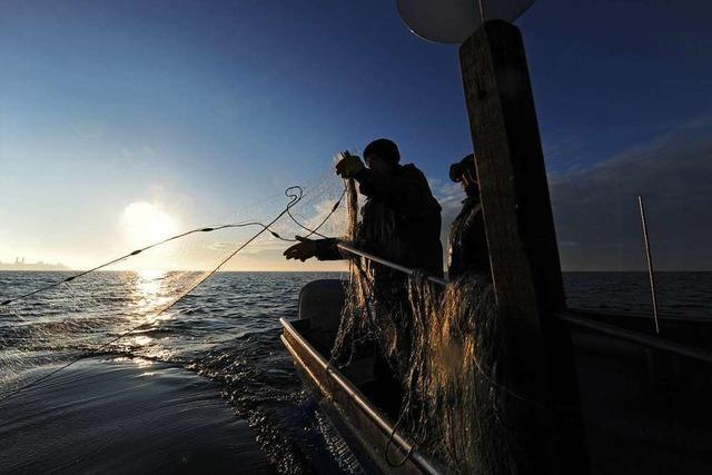 Bodensee-Fischer fangen so wenig Fische wie noch nie