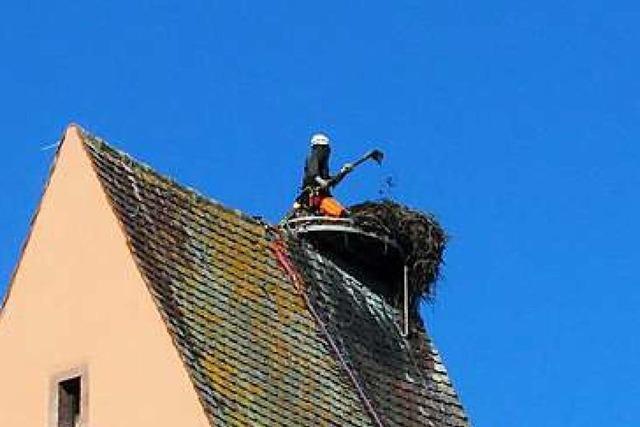 Storchennest sitzt wieder richtig auf dem Turm der Christuskirche