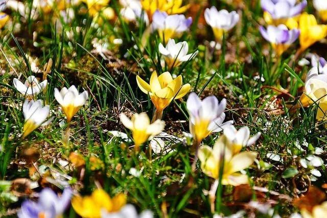 Leser fotografieren den frühen Frühling in Lahr