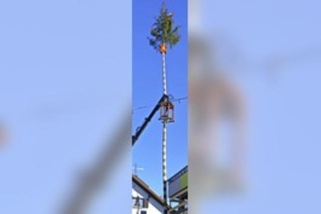 Baum steht
