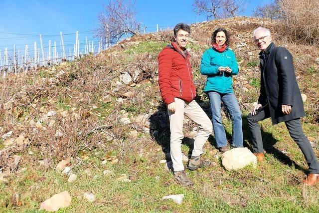 Darum haben die Steinriegel in Ebringens Weinbergen eine wichtige Funktion