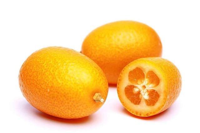 Köstliche Zierpflanze: die Kumquat