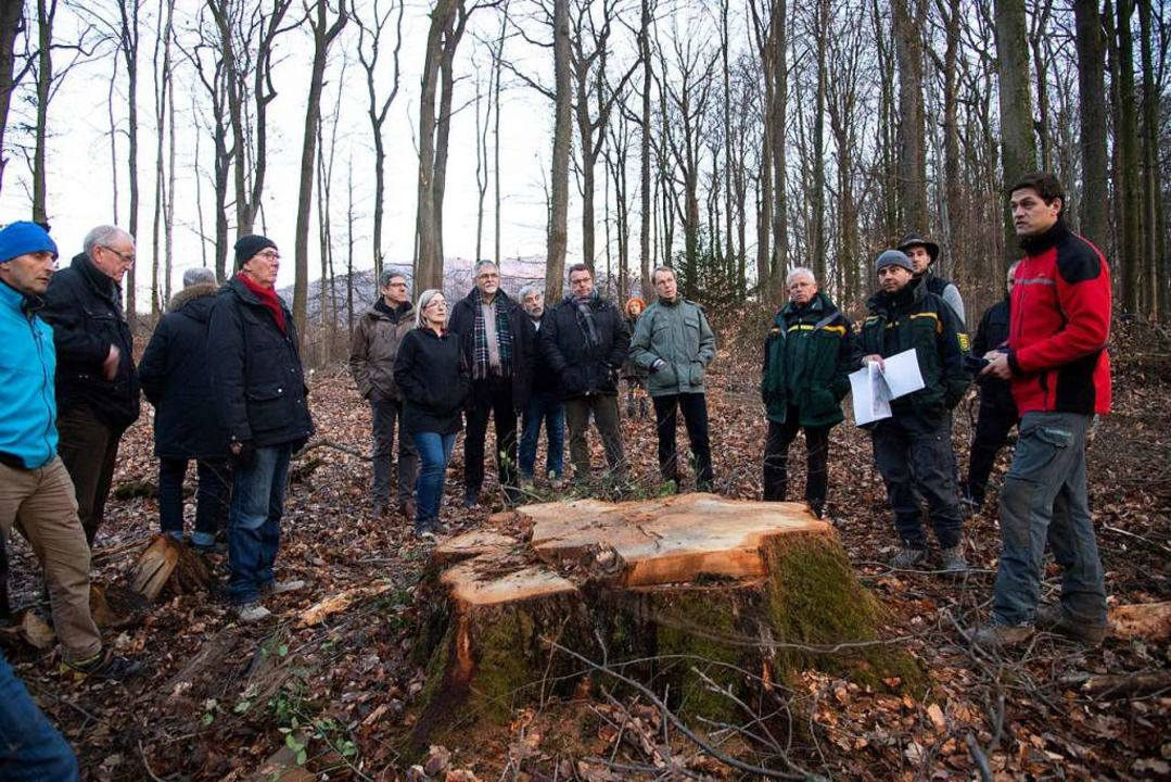 Hier stand einmal eine mächtige Eiche:...nderat auf Erkundungstour im Eichwald.  | Foto: Volker Münch