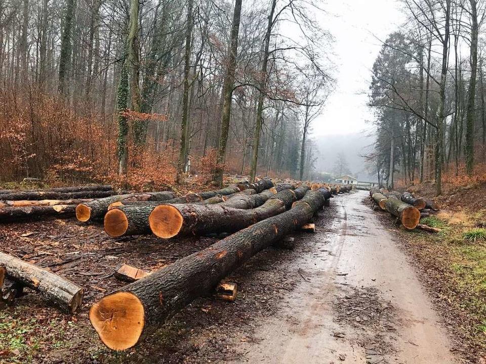Eichenstämme  wie diese bringen viel Geld auf dem Holzmarkt.  | Foto: Stadt Müllheim