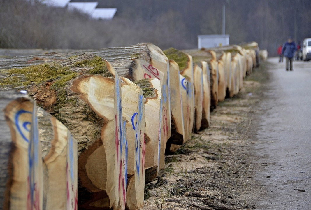 Auch die Eiche ist laut Ulrich Kohnle ...Holzauktion  im Offenburger Stadtwald.  | Foto: hrö