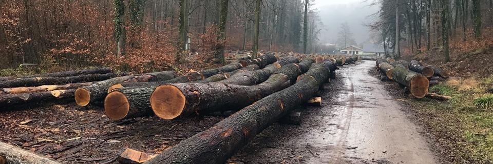 Warum der Streit um den Müllheimer Eichwald so erbittert geführt wird