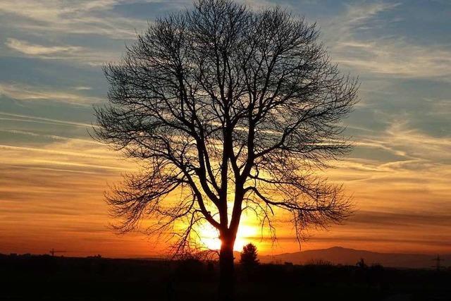 Der Kaiserstuhl wird von der Sonne verwöhnt