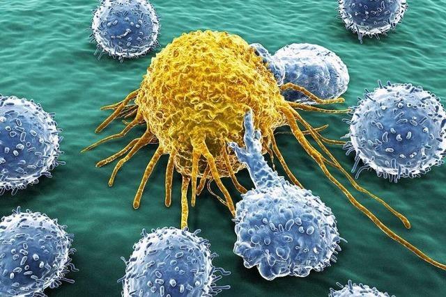 Die Krebsmetapher ist gefährlich – nicht nur in Dietenbach