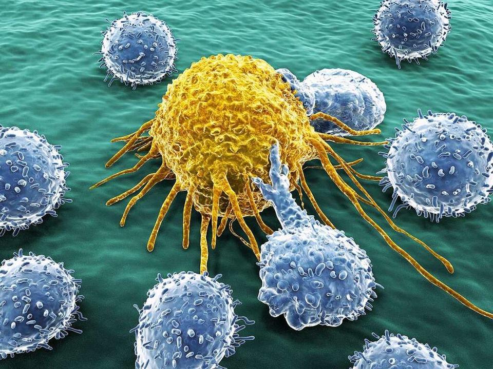Immunzellen greifen eine Krebszelle an...ich die Gesellschaft nicht vorstellen.    Foto: Juan Gärtner  (stock.adobe.com)
