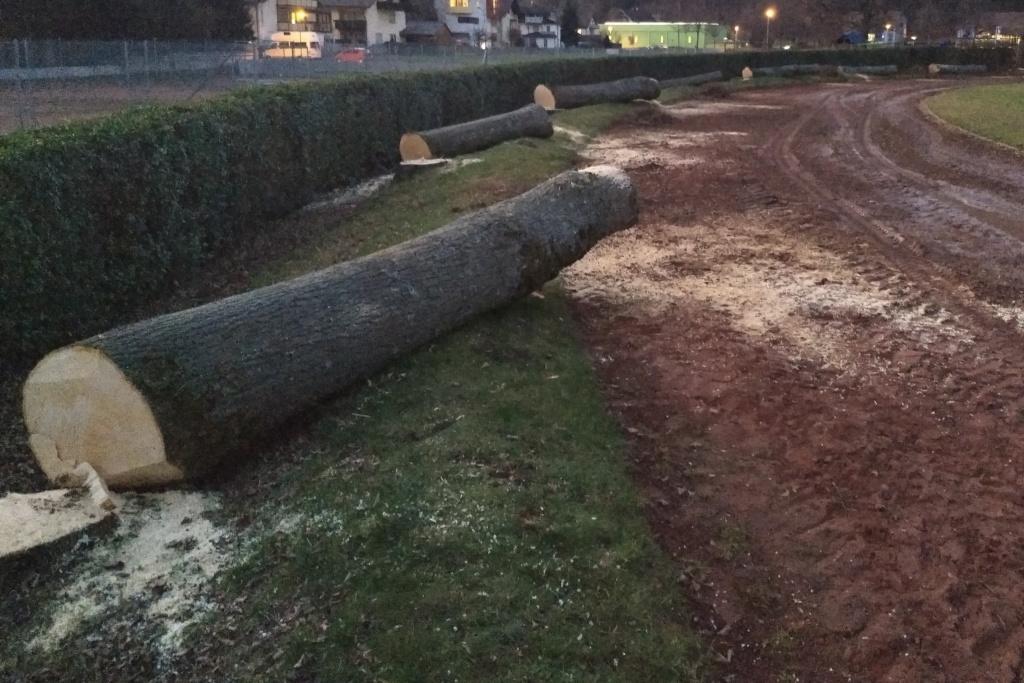 Die Bäume am Sportplatz in Waldkirch-Kollnau sind fast alle weg – Waldkirch – Badische Zeitung