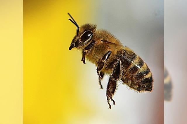 Bibi, Bienen, Bücher: Unsere Tipps für Kids