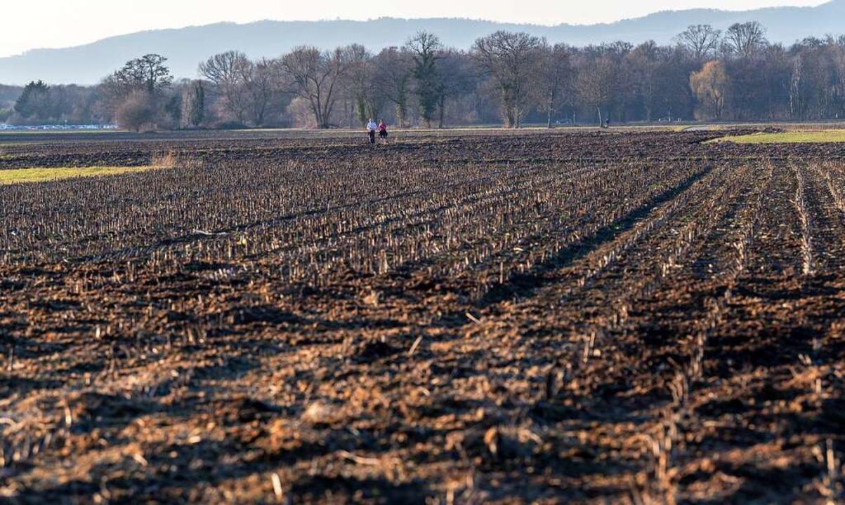 Das Dietenbachgelände wird aktuell noch landwirtschaftlich genutzt.  | Foto: dpa