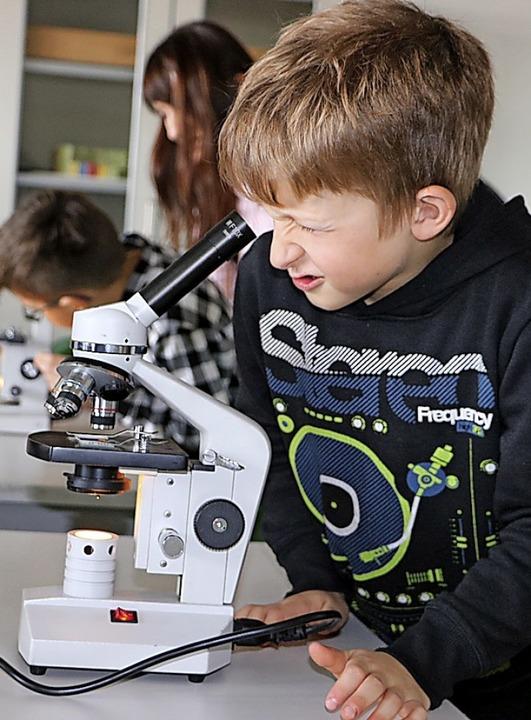 Spannend, was es alles unter dem Mikroskop zu entdecken gibt.  | Foto: Martha Weishaar