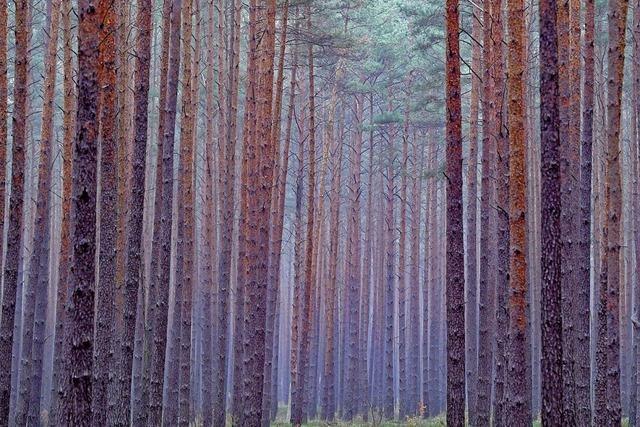 Wehrer Bannwald steht unter besonderem Schutz
