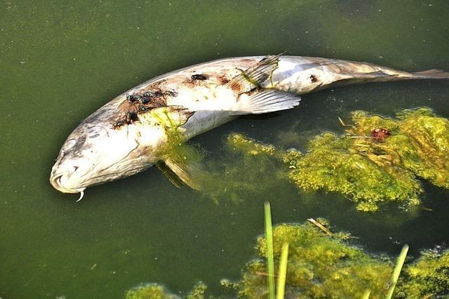 Angler beklagen Fischverluste
