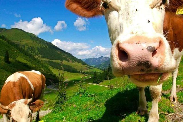 Kleine Landwirtschaftsbetriebe geben auf, die Großen wachsen