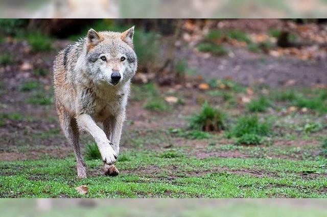 Widerspricht das Jagdgesetz dem Grundgesetz?