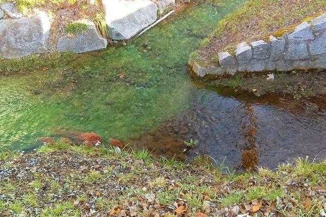 Warm- und Neumattbach waren grün verfärbt – weil das Tiefbauamt einen Test durchführte