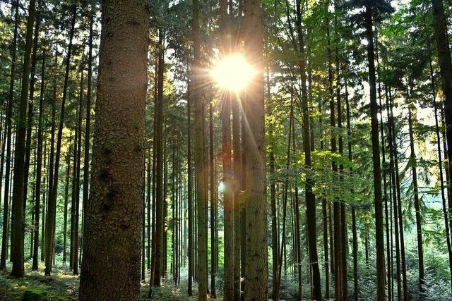 Waldbauern im Tal zeigten sich kollegial