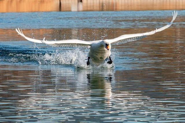 7-jährigem Mädchen gelingt Schnappschuss am Flückiger See