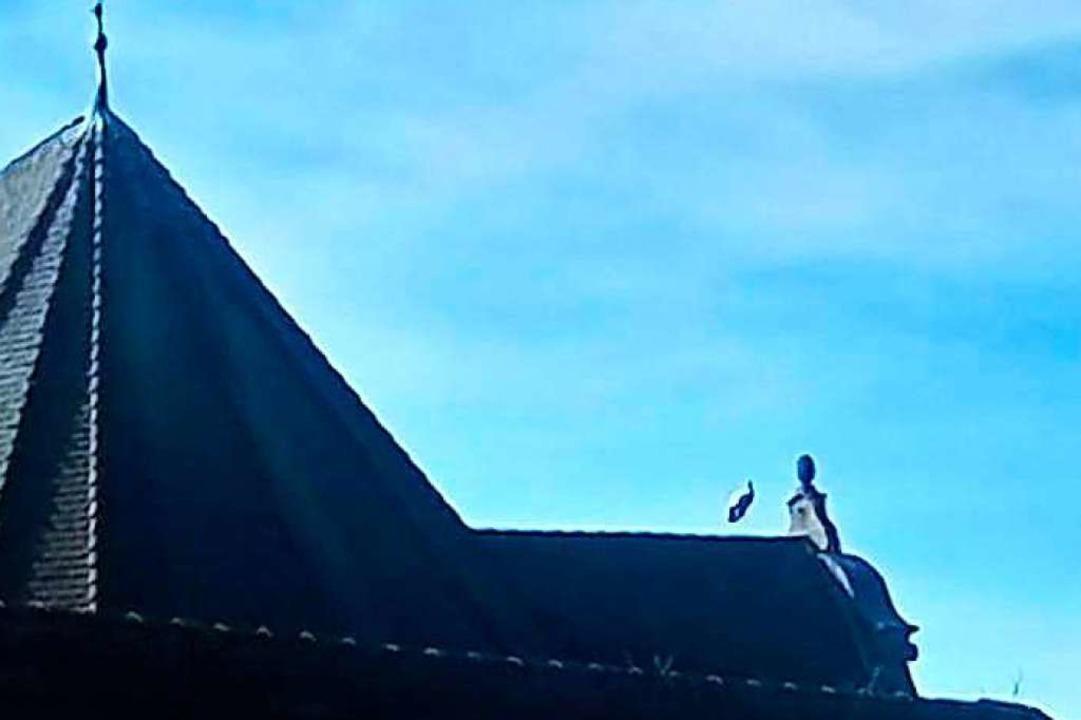 Seitdem die Nester weg sind, sitzen einige Störche verwirrt auf dem Dach.   | Foto: Privat