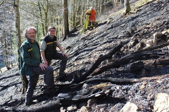 Landratsamt warnt vor Waldbrand