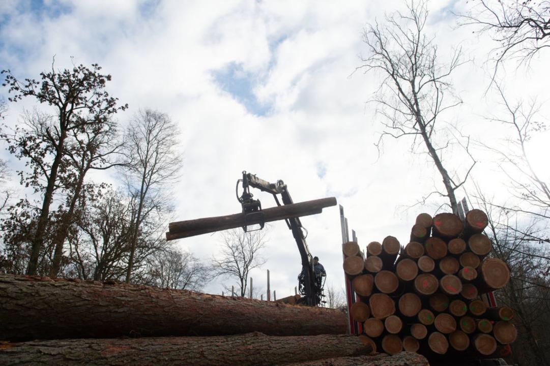 Im Februar 2019 werden in Flechtingen ...ark ausgetrockneten Wäldern zugesetzt.  | Foto: dpa