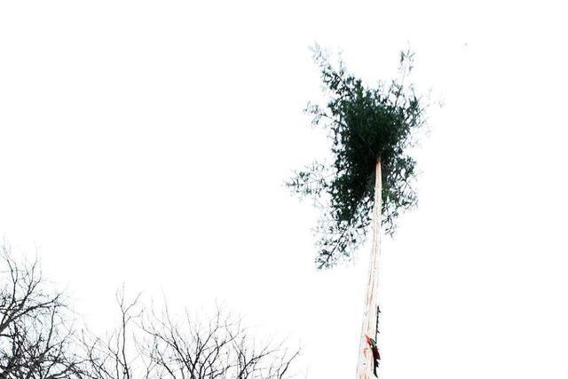 Remmidemmi um den Narrenbaum in Freiburg