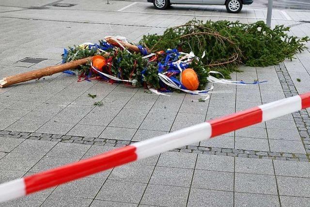 Der Rheinfelder Narrenbaum fällt dem Sturm zum Opfer