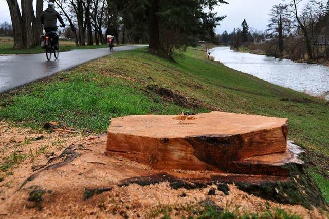 Im Landschaftspark Wiese wurden mehr als 40 Bäume gefällt