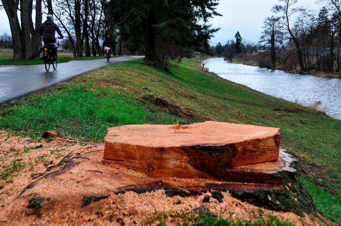 43 Bäume im Uferbereich der Wiese ließ das baselstädtische Tiefbauamt fällen.    Foto: Daniel Gramespacher