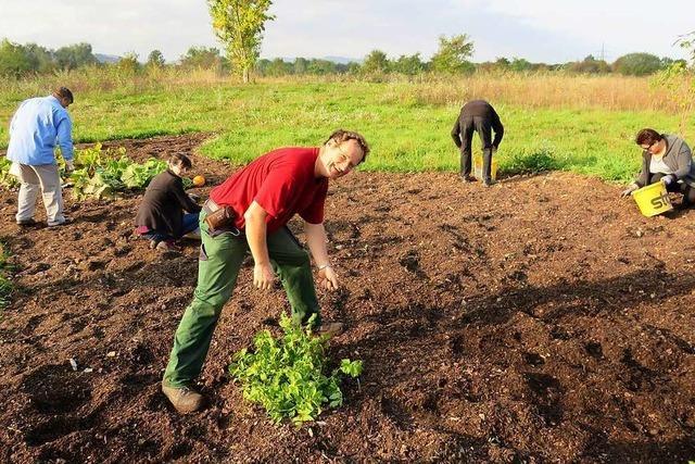 Das Stadtgärtle in Rheinfelden trotzt dem Klimawandel