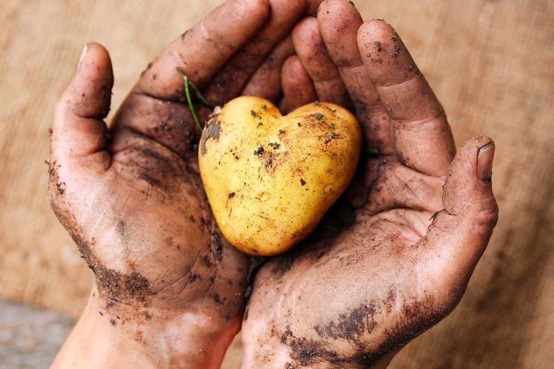 Wegen der wachsenden Weltbevölkerung muss die Nahrungsmittelproduktion steigen.   | Foto: ADOBE