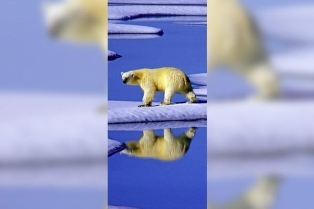 Wenn der Eisbär kommt