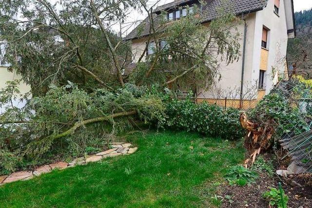 Sturmtief Bennet knickt in Freiburg Bäume um