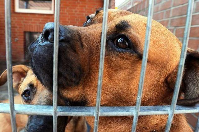 Eine Hundetrainerin gibt Tipps zum Hundekauf
