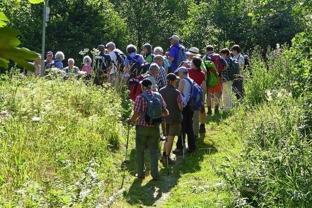 Schwarzwaldvereine bieten Wanderfreunden ein volles Programm