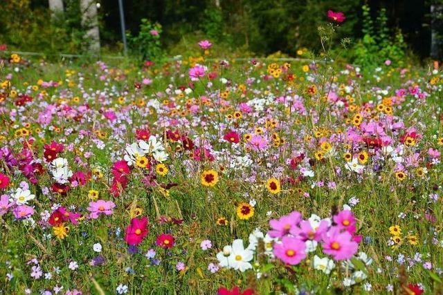 Ihringen will mehr Bäume und Blumen im Dorf – statt Kiesflächen