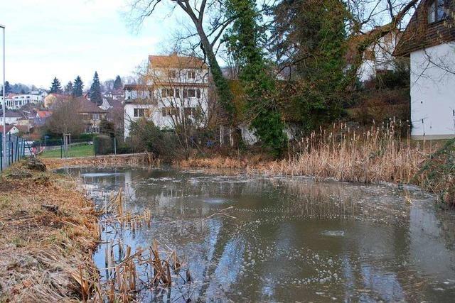 Behörde stoppt Fällen von Bäumen auf Lörracher Grundstück
