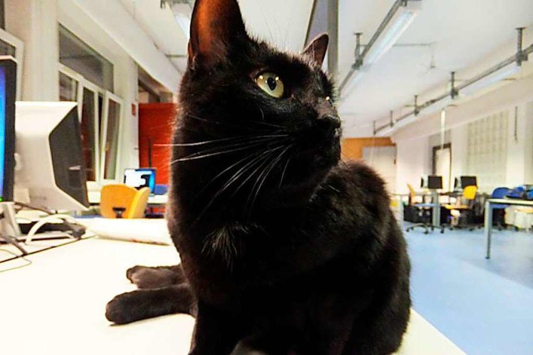 Die Katze ist in Wirklichkeit ein Kater.  | Foto: Uni Freiburg/Facebook/Poolkatze