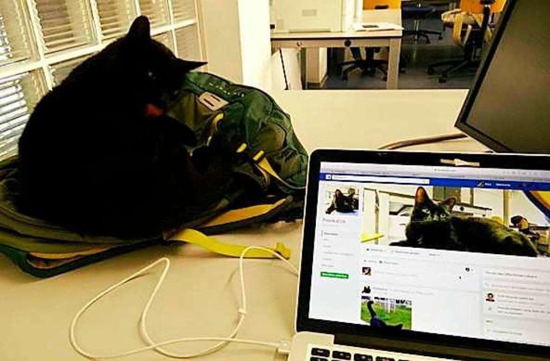 Nachdem die Poolkatze ihren Facebook-A...t hat, ist es Zeit für ein Nickerchen.  | Foto: Uni Freiburg/Facebook/Poolkatze