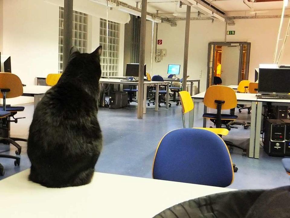 Die Poolkatze ist mindestens 16 Jahre alt, sagt Sacha Frank, oder sogar älter.  | Foto: Uni Freiburg/Facebook/Poolkatze