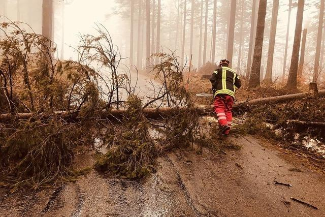 Umgestürzte Bäume auf Straße zum Kandelgipfel